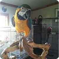 Adopt A Pet :: Rio - Whitehall, MT
