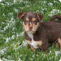Adopt A Pet :: Desmond - Ft. Collins, CO