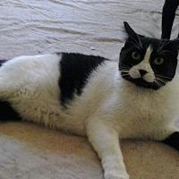Adopt A Pet :: Bree - Lancaster, CA