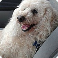 Adopt A Pet :: Sonny (Sammy) - Mississauga, ON