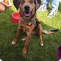 Adopt A Pet :: Austin - Fort Riley, KS