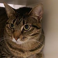 Adopt A Pet :: Jordan - Bridgeton, MO