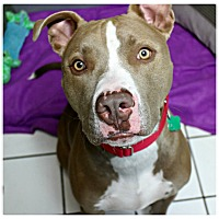 Adopt A Pet :: Lucian - Forked River, NJ