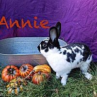 Adopt A Pet :: Annie - Elizabethtown, KY