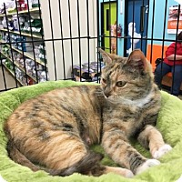 Adopt A Pet :: Lady Bug - Wilmore, KY