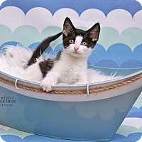 Adopt A Pet :: Winky - Sterling Heights, MI
