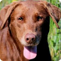 Adopt A Pet :: GABE(TRAINED-SO SMART!!!) - Wakefield, RI