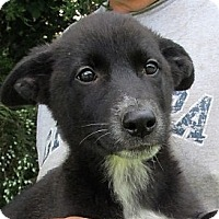 Adopt A Pet :: Skyee - Germantown, MD