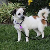 Adopt A Pet :: KELSEY - Newport Beach, CA