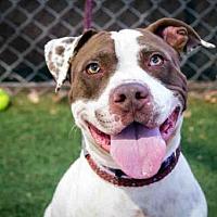 Adopt A Pet :: HOPPER - Phoenix, AZ