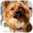 Photo 1 - Pomeranian/Spaniel (Unknown Type) Mix Dog for adoption in Los Angeles, California - Foxy