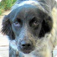 Adopt A Pet :: Dixie - Oakley, CA