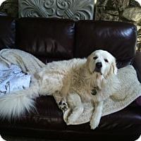 Adopt A Pet :: Sisco - Minneapolis, MN