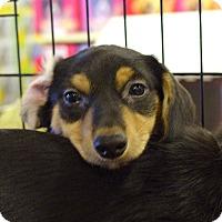 Adopt A Pet :: Franklin - Pittstown, NJ