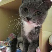 Adopt A Pet :: Monique - Albany, NY