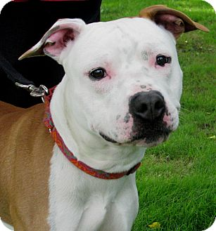 Terrier (Unknown Type, Medium) Mix Dog for adoption in New Kensington, Pennsylvania - Chance