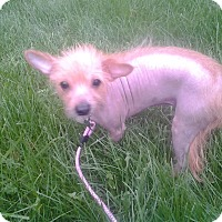 Adopt A Pet :: ZIVA - Upper Sandusky, OH