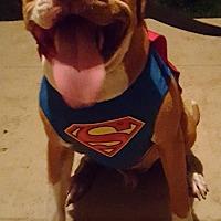 Adopt A Pet :: Jaxx- Courtesy Listing - Fredericksburg, VA