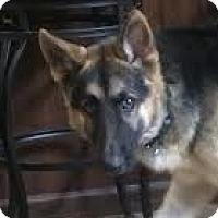 Adopt A Pet :: Bailey - Dripping Springs, TX