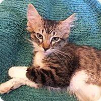 Adopt A Pet :: Pinky - Los Angeles, CA
