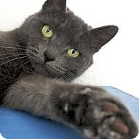 Adopt A Pet :: Gretta - Potsdam, NY