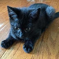 Adopt A Pet :: SLASH - Woodstock, GA