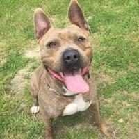 Adopt A Pet :: Tino - Barco, NC