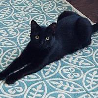 Adopt A Pet :: Nugget - McKinney, TX