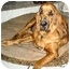 Photo 2 - Bloodhound Dog for adoption in Phoenix, Arizona - Abbie