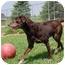 Photo 1 - Labrador Retriever Mix Dog for adoption in Barron, Wisconsin - Kahlua