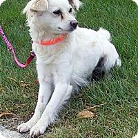 Adopt A Pet :: CAMI - Warren, NJ