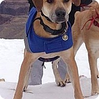 Adopt A Pet :: Avi - Gilbert, AZ