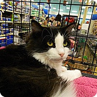 Adopt A Pet :: Angelina - The Colony, TX