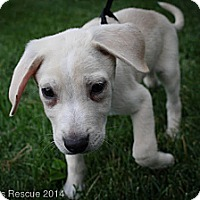 Adopt A Pet :: Boone - Broomfield, CO