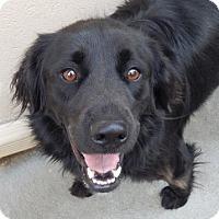 Adopt A Pet :: Pepper - Foster, RI