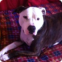 Adopt A Pet :: Junebug - Acushnet, MA