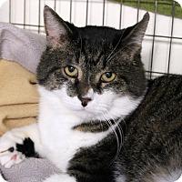 Adopt A Pet :: Isaac Newton - Chicago, IL