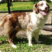 Adopt A Pet :: Purdy - Bedminster, NJ
