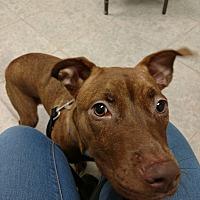 Adopt A Pet :: Noelle - Lakeland, FL