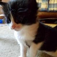 Adopt A Pet :: Morey - Rochester, NY