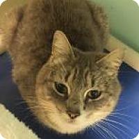 Adopt A Pet :: Janet 7353 - Columbus, GA