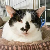 Adopt A Pet :: Salena - McPherson, KS