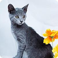 Adopt A Pet :: Flint - Murfreesboro, NC