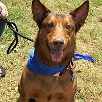 Adopt A Pet :: Declan - Roswell, GA