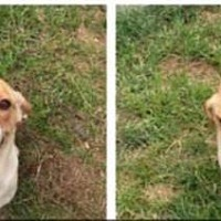 Adopt A Pet :: Sadie (bonded with Smoke) - Newport, KY