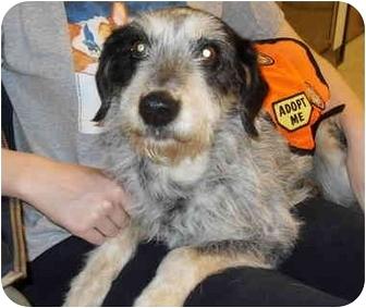 Terrier (Unknown Type, Medium) Mix Dog for adoption in Westport, Connecticut - Vanessa