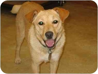 Labrador Retriever/Retriever (Unknown Type) Mix Dog for adoption in Portsmouth, Rhode Island - Emma - pending