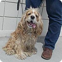 Adopt A Pet :: ALEX - Tacoma, WA