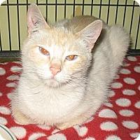 Adopt A Pet :: Francesca - Shelton, WA