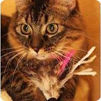 Adopt A Pet :: Bailey - Chandler, AZ